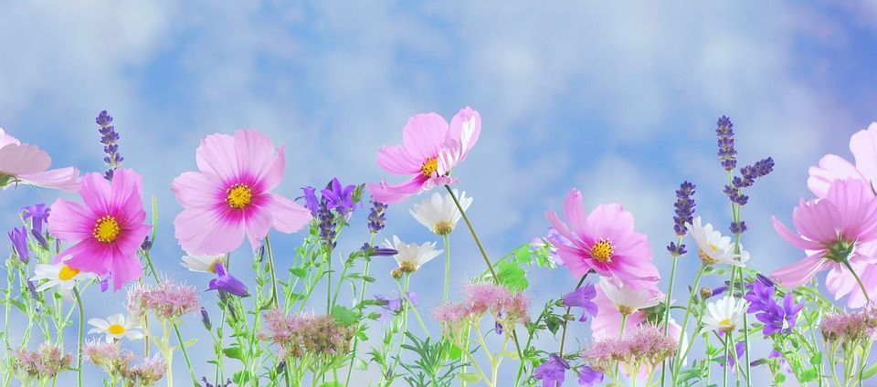 wild-flowers-571940_960_720.jpg
